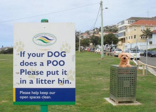 dog-bin